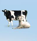 dairy_menu