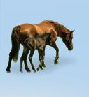 horse_menu