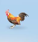 poultry_menu