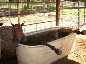 horse in trough